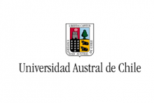 Universidad Austral -Pregrado